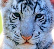 Tiger Cub by Vitalia