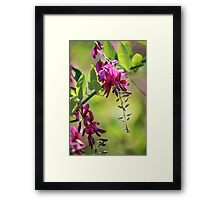 little pink flowers Framed Print