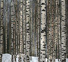 Birches in the forest 2 by Markku Mestilä