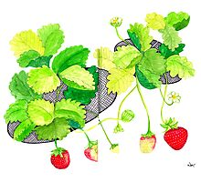 Sketch 18 ... Strawberries Photographic Print