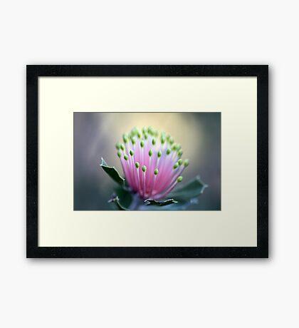 WA Wildflowers Framed Print