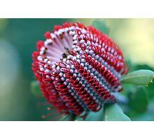 WA Wildflowers Photographic Print