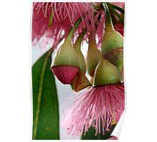 Gum Flowers Poster