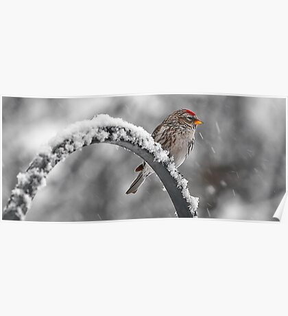 A Red Poll -- Waiting Out The Storm Poster