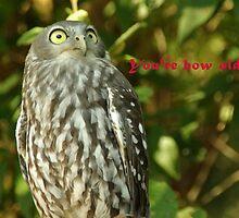 It's an owl by retsilla