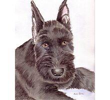 Max, a Schnauzer Puppy Photographic Print