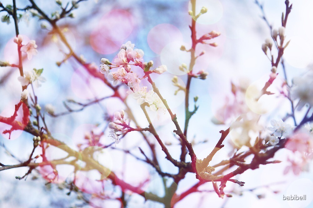 Bokeh Blossom #2 by Claire Dimond