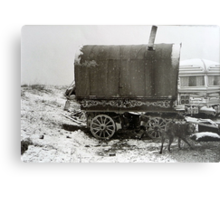 Vardo and Lurcher on a Gypsy Site in Yorkshire Metal Print