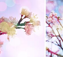 Blossom #3 | Diptych by Claire Elford