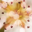 Bokeh | Pink | #2 by Claire Elford