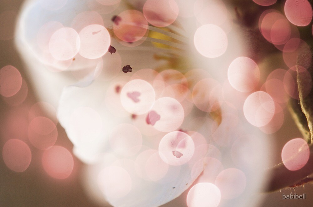 Bokeh | Pink | #3 by Claire Dimond