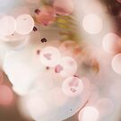 Bokeh | Pink | #3 by Claire Elford
