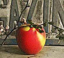 A=apple by Yool