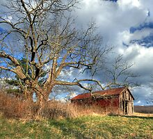 Afternoon on the Farm by Lori Deiter