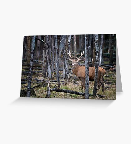 Red Deer In Forest Greeting Card