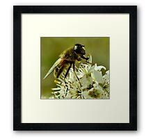 Honey-Bee Framed Print