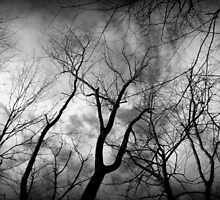 One creepy tree line by Megan  Daugherty