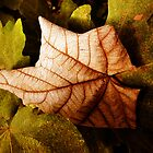 Autumn Leaf by Elly Rousou