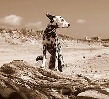 Dalmatian Dog Ready for Take Off by lisa hartman