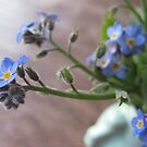 Forget-Me-Not by Barbara Wyeth