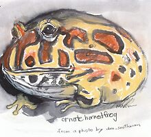 Ornate Horned Frog by WoolleyWorld