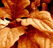 Sepia Leaves ^ by ctheworld