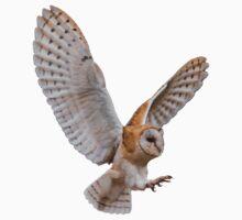 Barn Owl Attack by Alec Owen-Evans