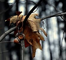 Winter's end is near. by Chuck Chisler