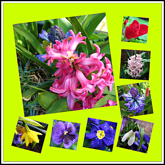 Crazy Spring Flowers Collage by BlueMoonRose