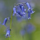 Nodding Bells by imagejournal