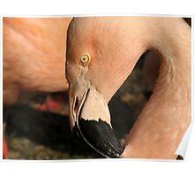 Flamingo Pink Poster