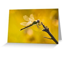 Yellow Striped Hunter Dragonfly Greeting Card