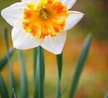 Springtime by Sunshinesmile83