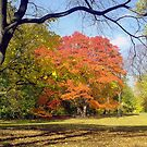 Autumn in Central Park, New York  by Alberto  DeJesus
