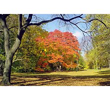 Autumn in Central Park, New York  Photographic Print