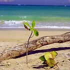 Baby Tree on San Juan Beach, Puerto Rico  by Alberto  DeJesus