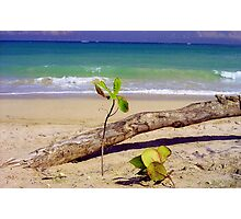 Baby Tree on San Juan Beach, Puerto Rico  Photographic Print