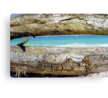 Driftwood, Puerto Rico  Canvas Print