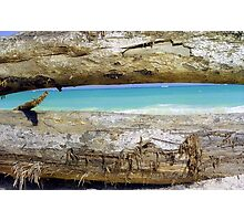 Driftwood, Puerto Rico  Photographic Print
