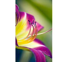 Day Lilly Photographic Print