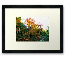 Fall Display Framed Print
