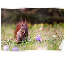 Spring Squirrel Poster