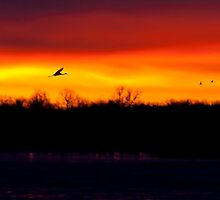 Across a Golden Sky by PGornell