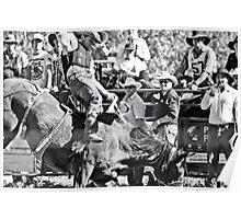 Stock Saddle Buckjump Poster