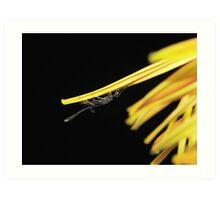 Unusual Insect Closeup Art Print