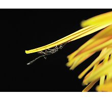 Unusual Insect Closeup Photographic Print