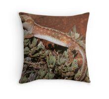 Lucasium dameum_Gluepot_SA Throw Pillow