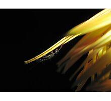 Wasp On Orange Flower Photographic Print