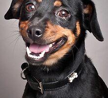 Cute dachshund mix by natalies