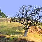 hillside slow growth oak tree by kayerain86